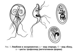 паразиты человека симптомы лечение фото